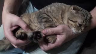 жизнь вне орхидей 13. Как подстричь коту КОГТИ? Стригу ВПЕРВЫЕ