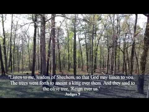Parable of the Trees by Jotham