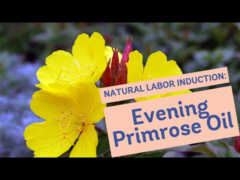 Natural Labor Induction Series Evidence On Evening Primrose Oil