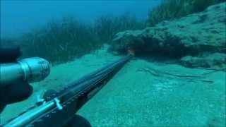 Zıpkınla Balık Avı Gürz AKSOY BEYAZ-KARAKULAK (MİNEKOP)