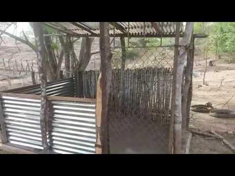 Corral para lechones barato y facil de hacer youtube for Para desarrollar un parque ajardinado