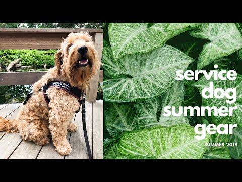 service-dog-summer-gear