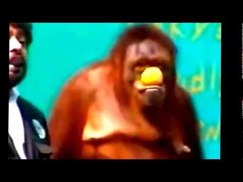 chú khỉ hài hước nhất năm là đây