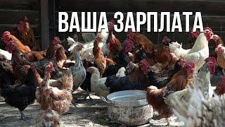 видео Экономический портал Барнаула