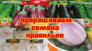 видео Как правильно выращивать рассаду баклажанов: подготовка семян и почвы, правила ухода за рассадой