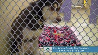 Adoptable Dogs in Clackamas County: Jun. 5 - Jun. 12