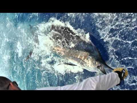 St. Lucia International Offshore Fishing Tournament 2015 - Marlin, Sailfish, Mahi Mahi