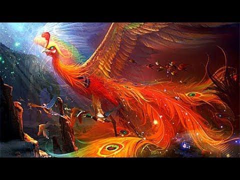 Ai Mà Ngờ Thức ăn Của Loài Chim Phượng Hoàng Lửa Lại Là ... Cỏ