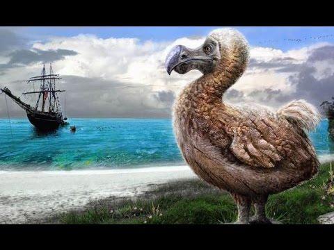 Top 10 Dieren Die Helaas Zijn Uitgestorven Youtube