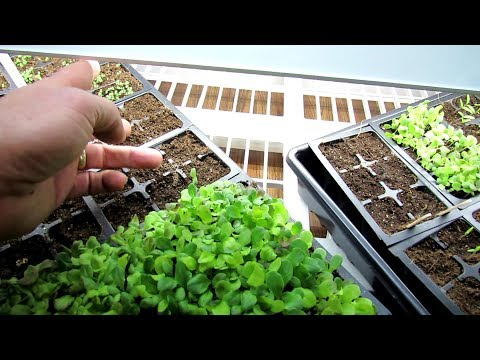 Seed Starting Basics: Worm Castings & Fertilizing, Lights On & Off, Watering - When, How & Why