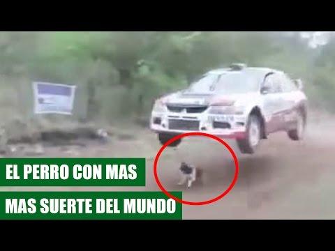 Perro se Salva de Milagro de ser Atropellado por un Coche || VÍDEO VIRAL 2016