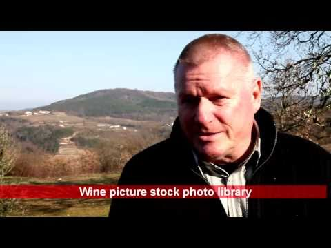 Wines and food of Istria in Croatia w Guido Schwengersbauer
