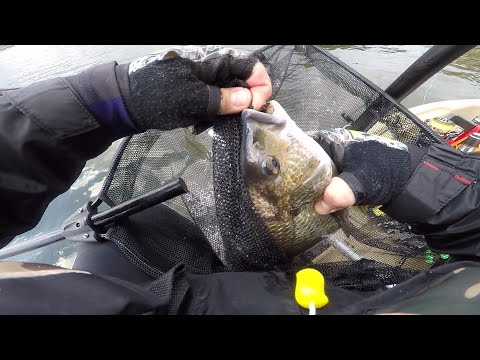Fishing For Bream With Soft Plastics