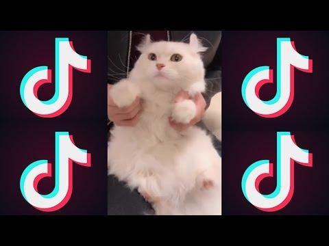 猫がYouTubeのウザい広告をやってみた【Tik Tok】