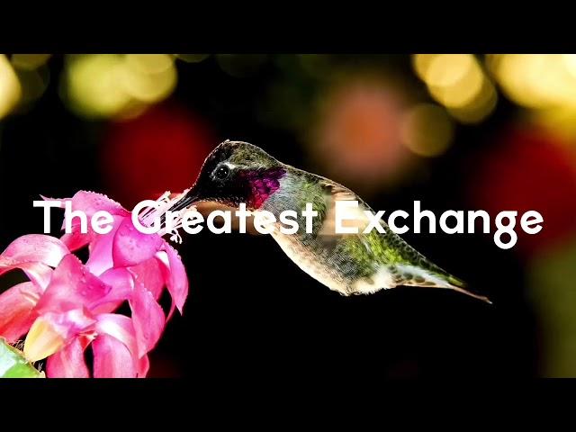 The Greatest Exchange