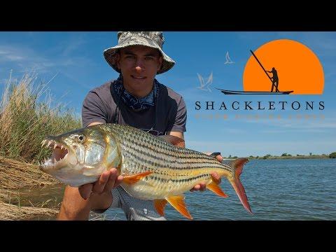 Tiger Fishing Upper Zambezi River (Shackleton's Tiger Fishing Lodge)