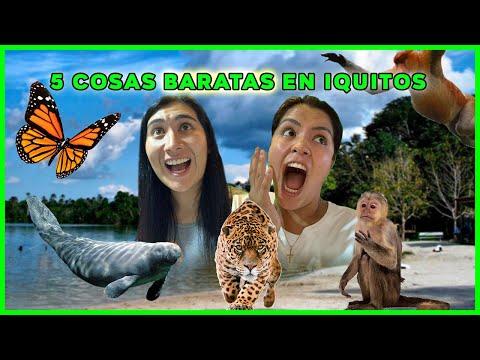 ¡MONOS SALVAJES 😱, MANATÍES, PLAYA SELVÁTICA🏝 Y MÁS! 🤩 | 3 días de MPV en Iquitos