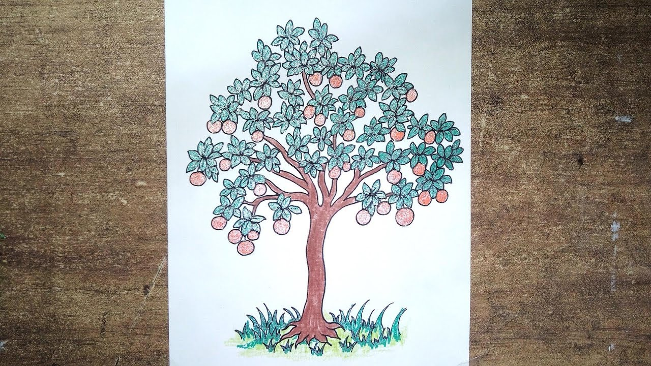How to Draw Orange Tree Very easy Drawing step by step ...