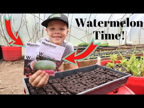 These Seeds Are The SECRET To Huge Watermelons!