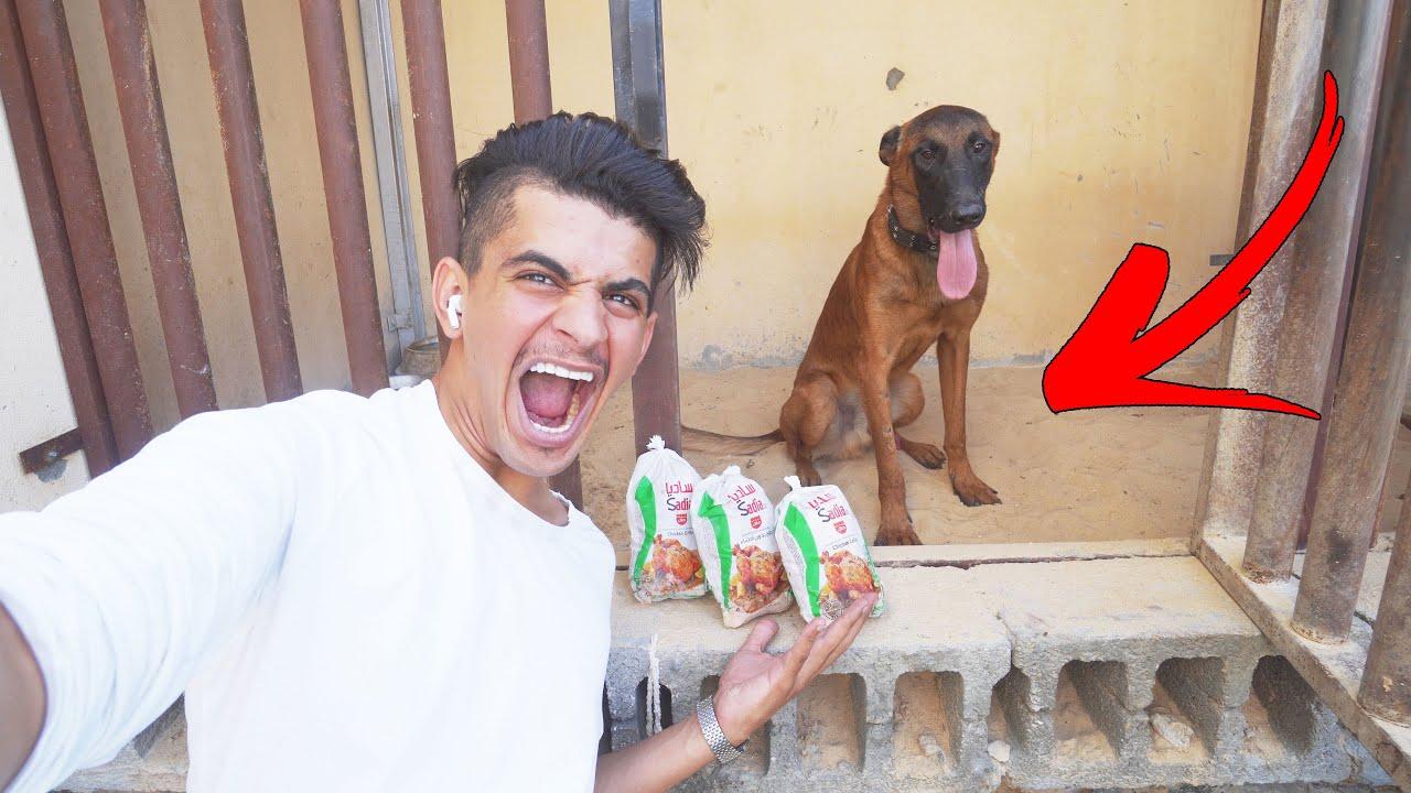 داخل كل دجاجة ورقة عقاب يحددها الكلب برلين | تاكل اكل برلين #2 !!