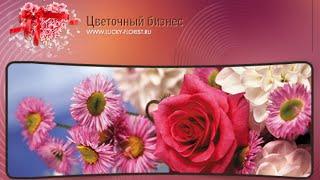 Хайп обзор: Цветочный бизнес! как заработать в интернете.