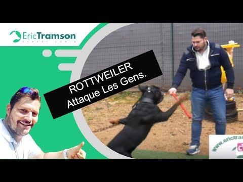 MONTPELLIER, comment éduquer un chien de race rottweiler qui mord son maitre par eric tramson
