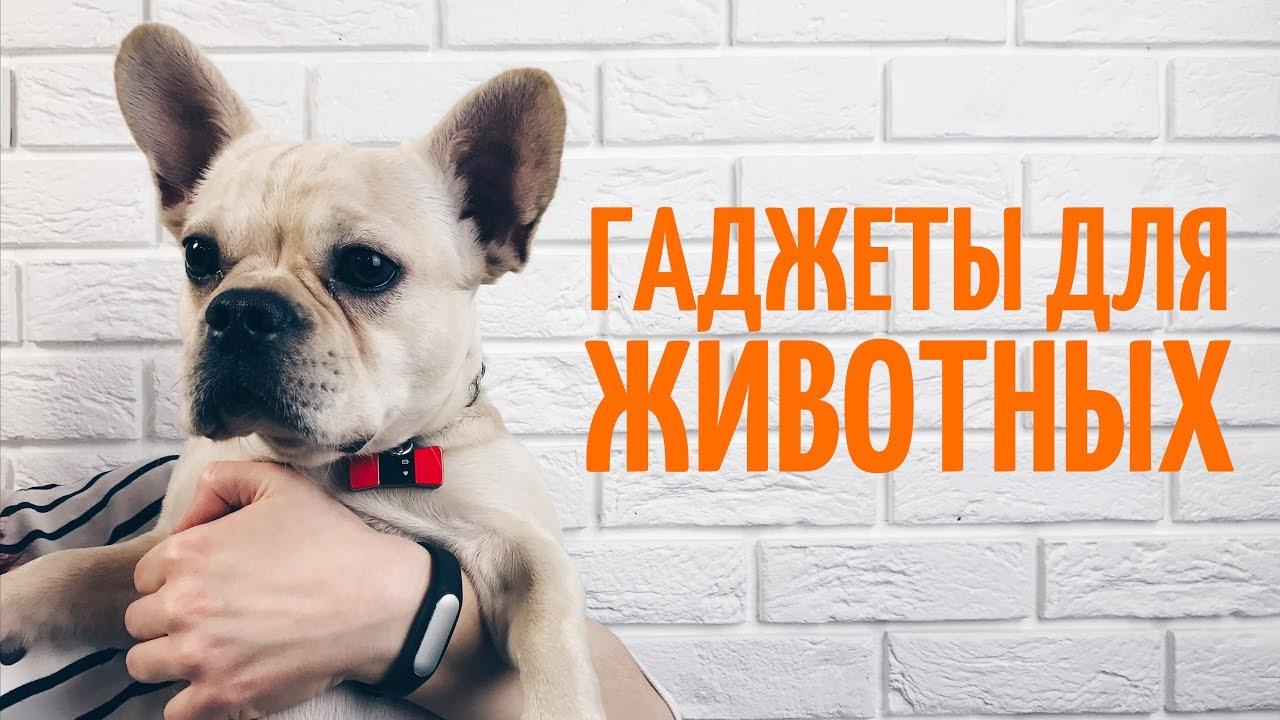 Картинки по запросу гаджеты для собак