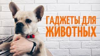 Трекер PetFit и Кормушка Hoison - гаджеты для животных!