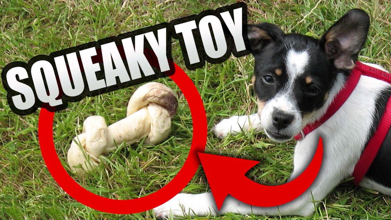 Squeaky Toy Sounds Play With Your Dog