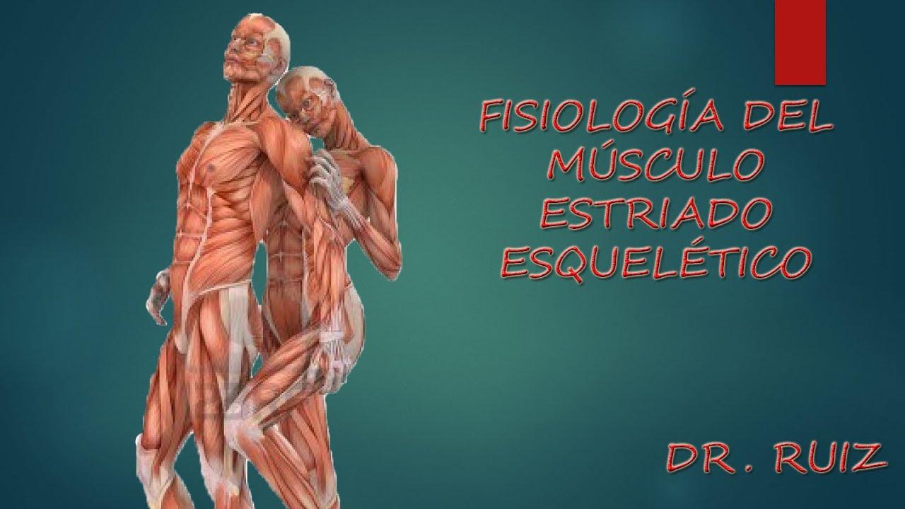 Fisiología del Musculo Estriado Esqueletico - YouTube