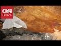 Ερευνητές ανακάλυψαν οργανισμό 50.000 ετών