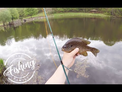 Beginner Fly Fishing Setup: Fly Fishing Kit That Catches Fish!