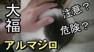 触ると噛み付いてくる大福アルマジロ猫