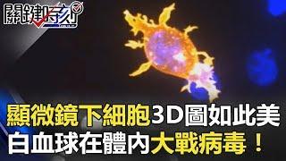 顯微鏡下細胞3D圖像居然如此美麗 透視白血球在你體內大戰病毒! 關鍵時刻 20180508-3 馬西屏