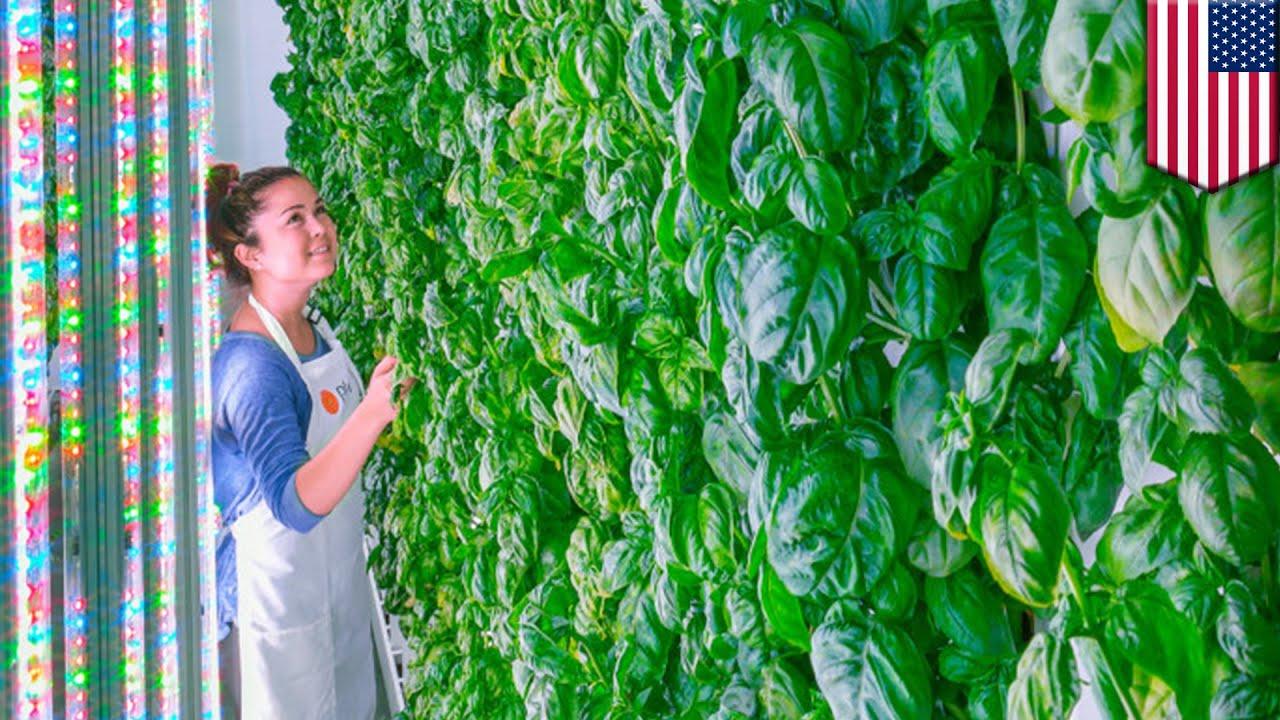 Vertical Farming Plenty Receives 200 Million Investment