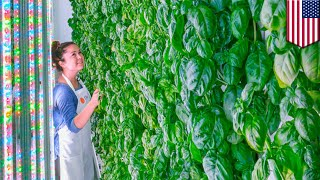 Vertical farming: Plenty receives $200 million investment from tech giants - TomoNews