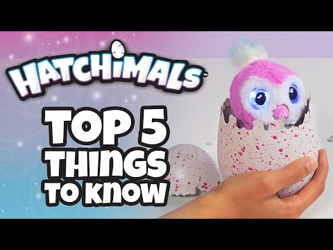 Hatchimals | Top 5 Things You Need To Know About Hatchimals