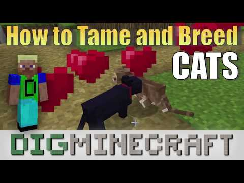 How to tame and breed Cats in Minecraft