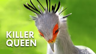 Secretary Birds: Killer Queens