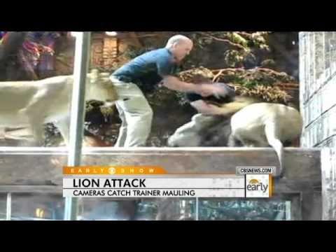 Las Vegas Lion Attack