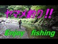 あなさんとワイワイヤマメ釣り ☆彡 渓流ミノーイング