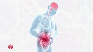 [BIEN-ÊTRE] L'intestin, notre 2ème cerveau #CCVB