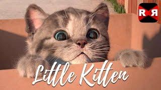 Little Kitten - My Favorite Cat - Best Interactive App For Kids & Toddlers