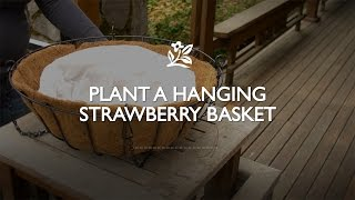 How To Plant A Hanging Strawberry Basket