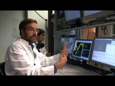 The Cognitive Neuroscience Laboratory at the German Primate Center