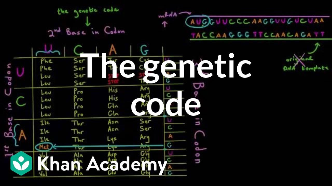 the genetic code essay All steps of protein synthesis easily  what is the genetic code  dna containing a gene for the production of a given protein into the genetic material of.