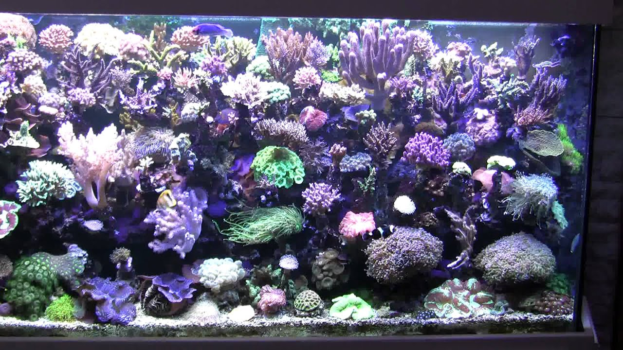 meerwasseraquarium 1000l hd reeftank youtube