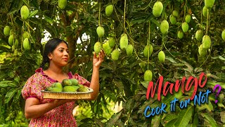 So many Mangoes in the tree, Cook It or Not! indeed you may eat them in raw | Traditional Me