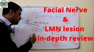 Facial Nerve & Lower Motor Neuron Lesion in-depth review