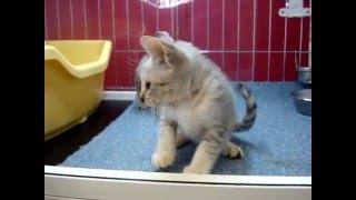 販売状況は公式ブログで → http://blogs.yahoo.co.jp/xll_dog_and_cat_l...